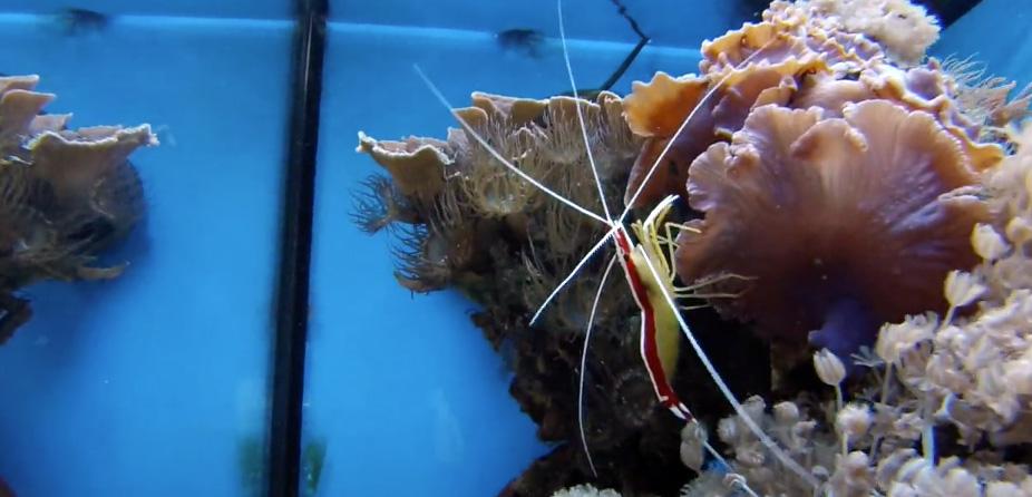 Nurkowanie w akwarium