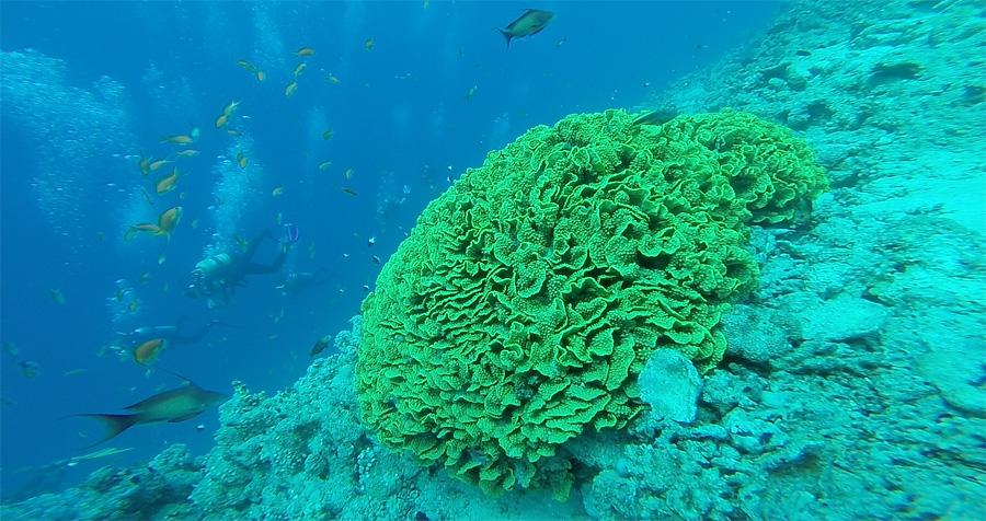 Nurkowanie koło wyspy Tiran – Egipt